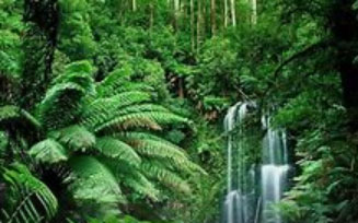 Revel in the Rainforest Image
